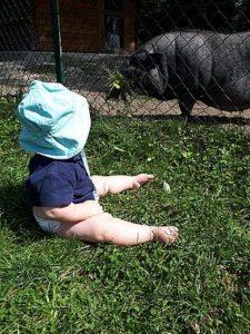 Baby und Hängebauchschwein im Zoo Linz