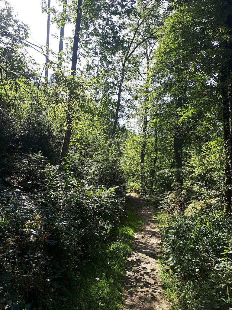 Wald im Aisttal